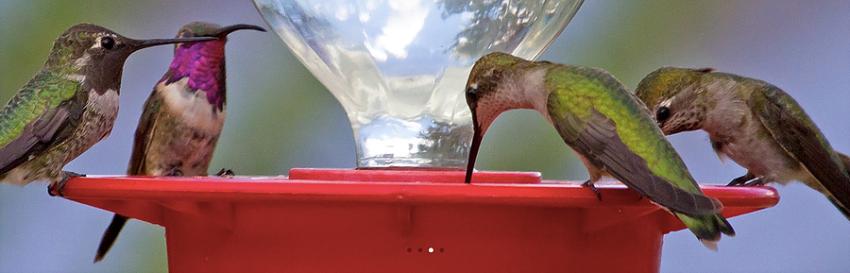 Tu patio puede salvar a las aves nativas de la frontera