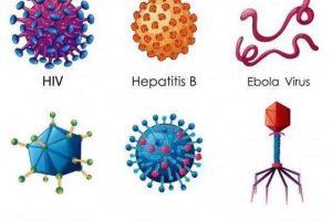 Sabes ¿Qué son los virus y cómo funcionan?